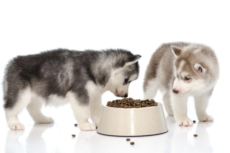 【子犬】や【老犬】に白菜を与えても大丈夫?