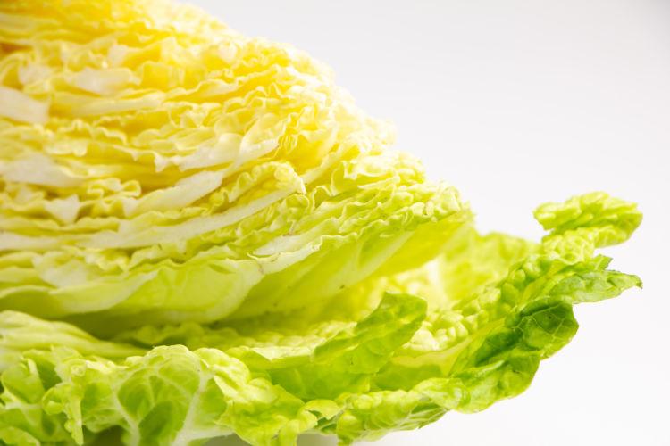犬に【生】の白菜や【芯】は食べさせても大丈夫?
