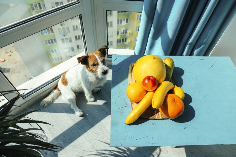 犬に「バナナ」製品を与えても大丈夫?
