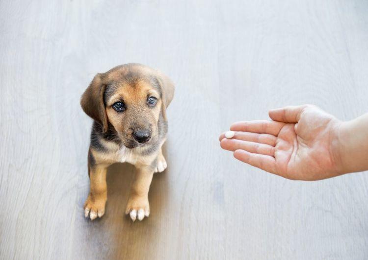 犬が薬を飲まない時、バナナに薬を入れて飲ませても大丈夫?