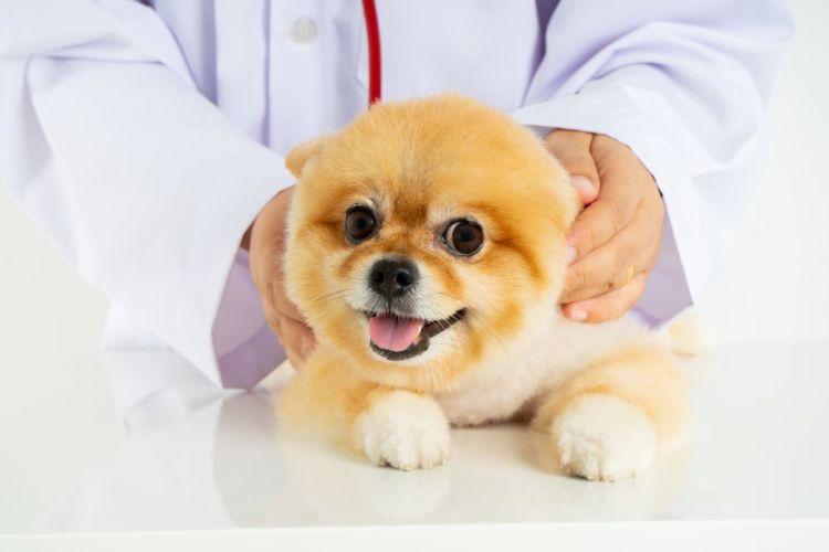 持病がある犬 獣医師 相談