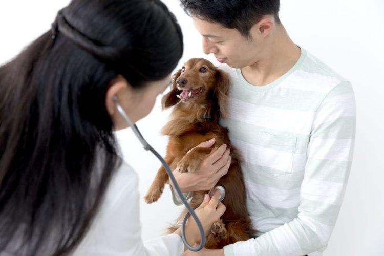 レーズン 犬 動物病院 受診