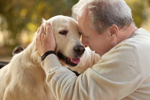 犬の知られざる癒やしの効果!医学的に認められたアニマルセラピーとは?