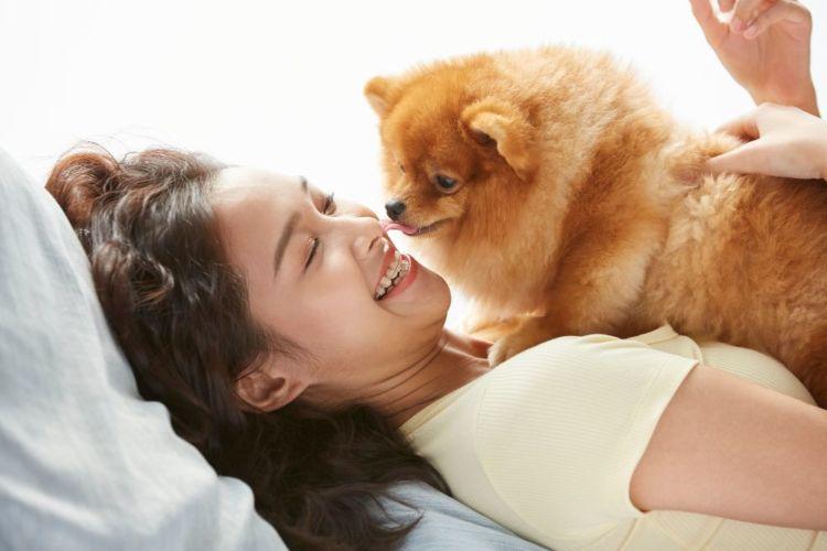 愛犬 飼い主 健康
