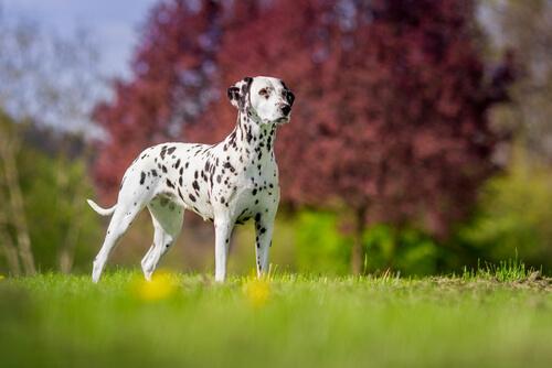 あの犬種って何だっけ!?懐かしの名作アニメでモデル犬になった犬たち4選