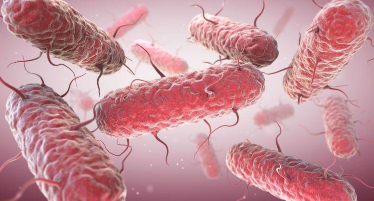 微生物 細菌 大腸菌