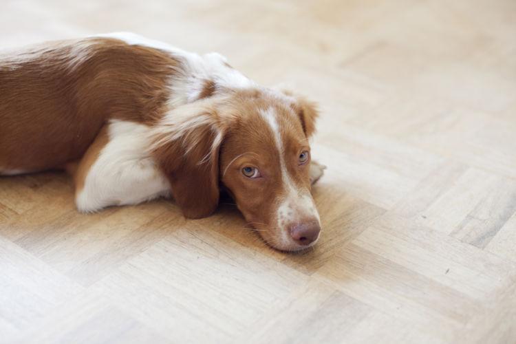 【獣医師監修】犬は栄養失調で死亡する?症状や原因は?愛犬の栄養(カロリー)不足の予防・解決法!