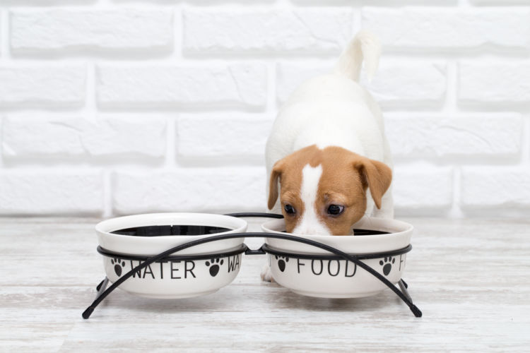 犬用の【ウェットフード】は、いつからいつまで与えていいの?