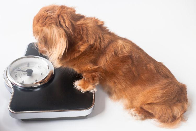 代謝の病気②【肥満】