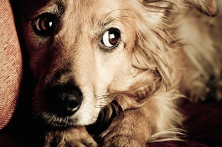 愛犬の心が危ない!4頭に1頭がお留守番の寂しさから孤独に苦しんでいる