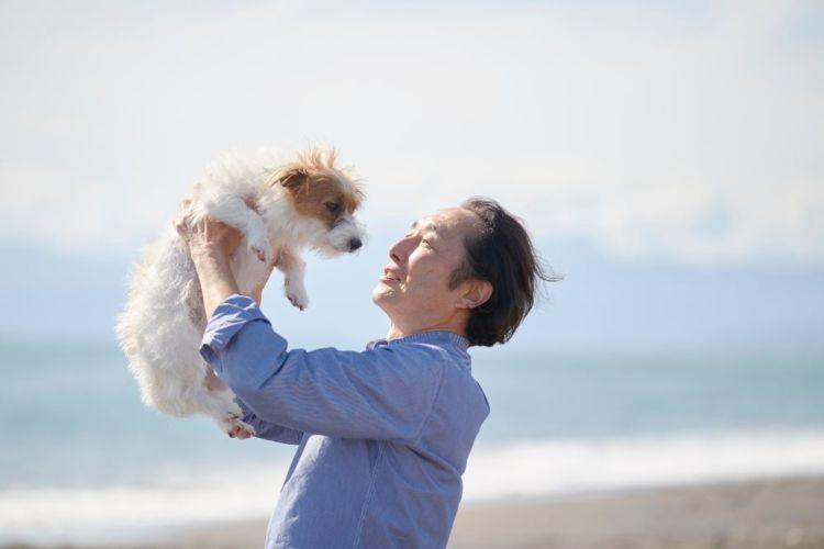 老犬 シニア犬 高齢