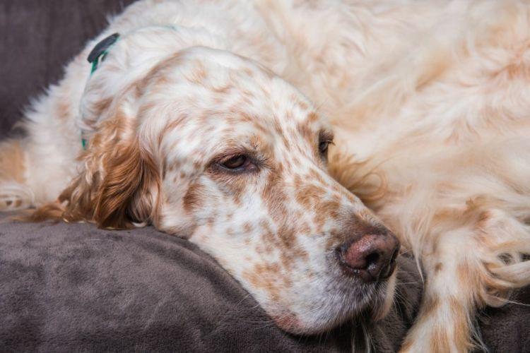 犬 代謝異常