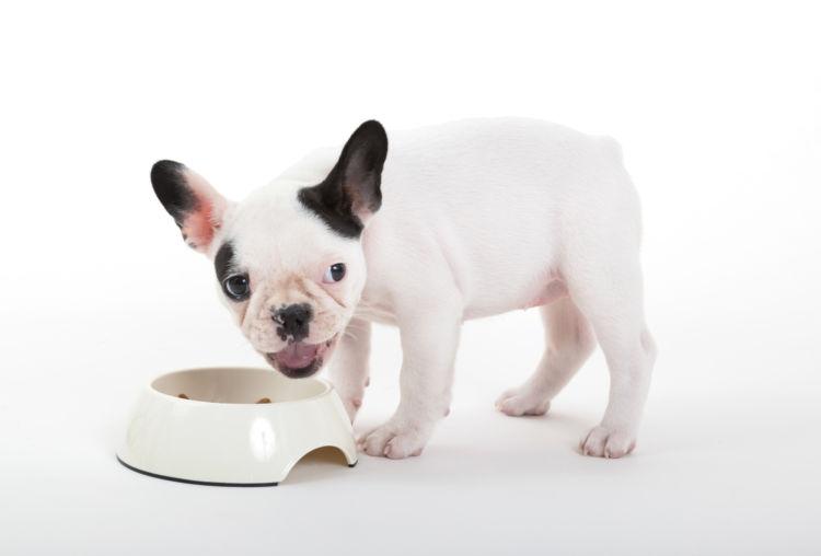 【子犬の栄養食】は?