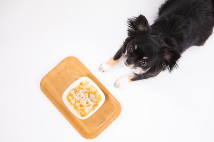 愛犬に【手作り栄養食】を与えたい場合は?