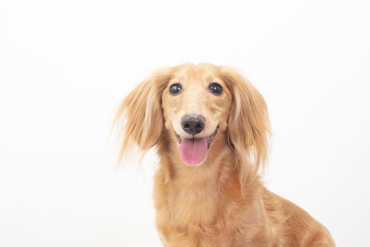犬の成犬期の栄養管理【成犬期(維持期)】