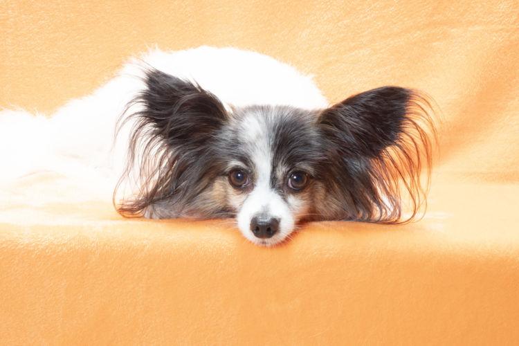 犬の栄養管理【中高齢期(シニア期)】