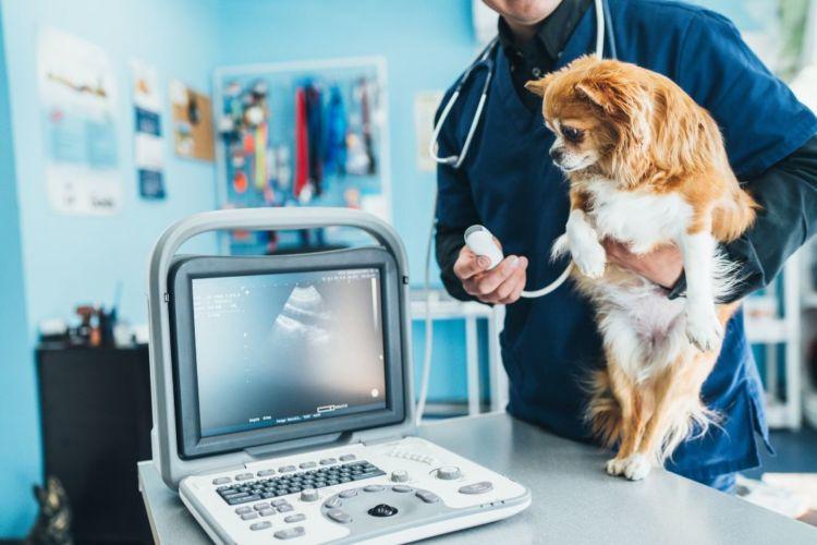 犬の唾液腺(唾液瘤)「診断」②【レントゲン検査・超音波検査】