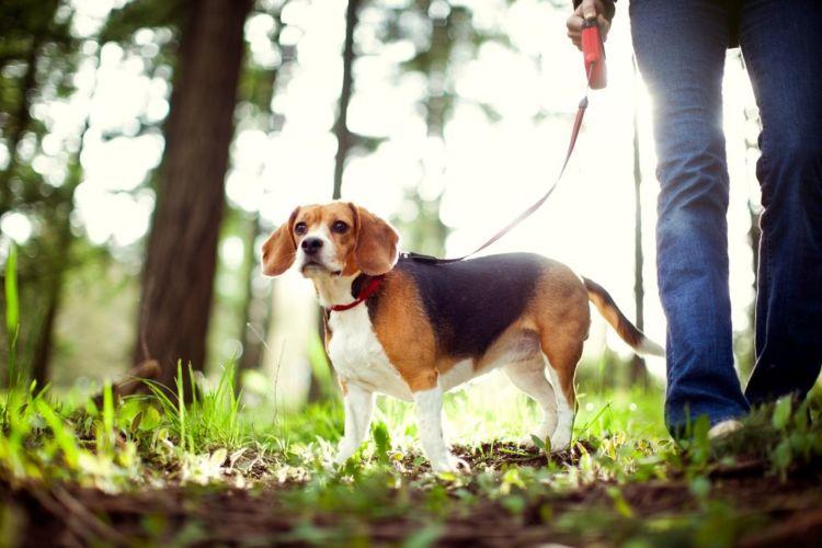 犬の唾液腺(唾液瘤)【予防対策】