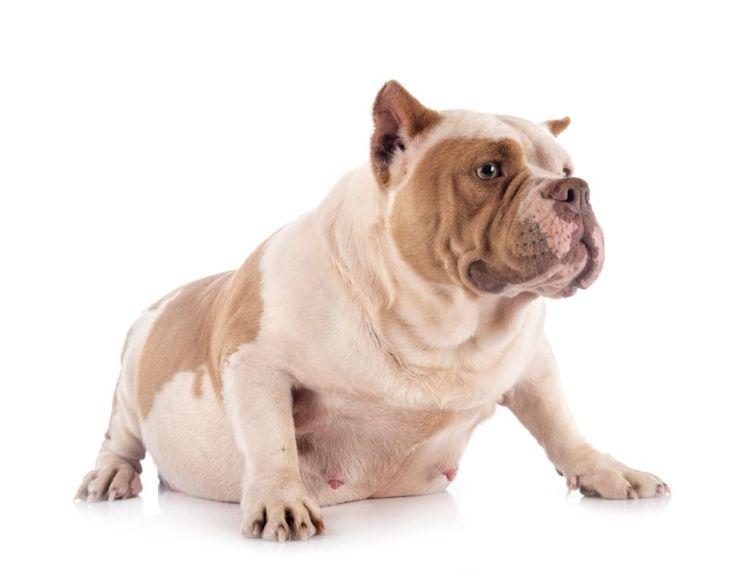 犬の口蓋裂(こうがいれつ)【予防対策は?】