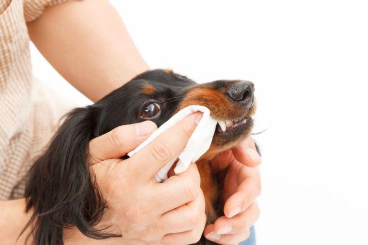 後天的な犬の口蓋裂(こうがいれつ)【注意点・ケア方法は?】