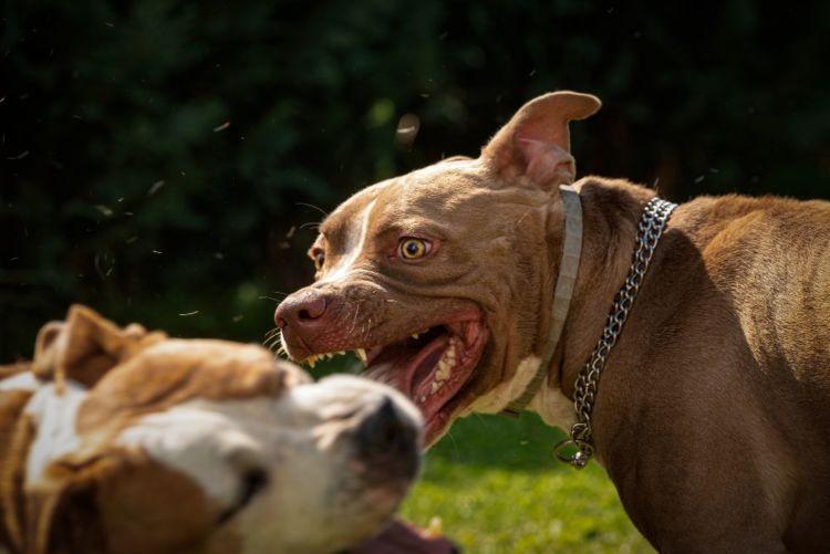犬の口唇炎(こうしんえん)【原因は?】