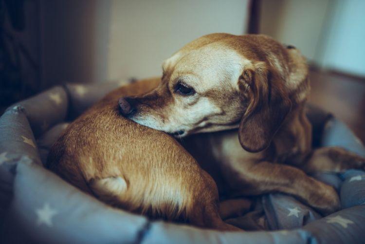 犬の口唇炎「原因」④【アレルギー】