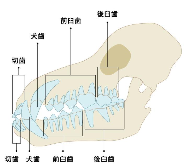 歯周病に起因する場合