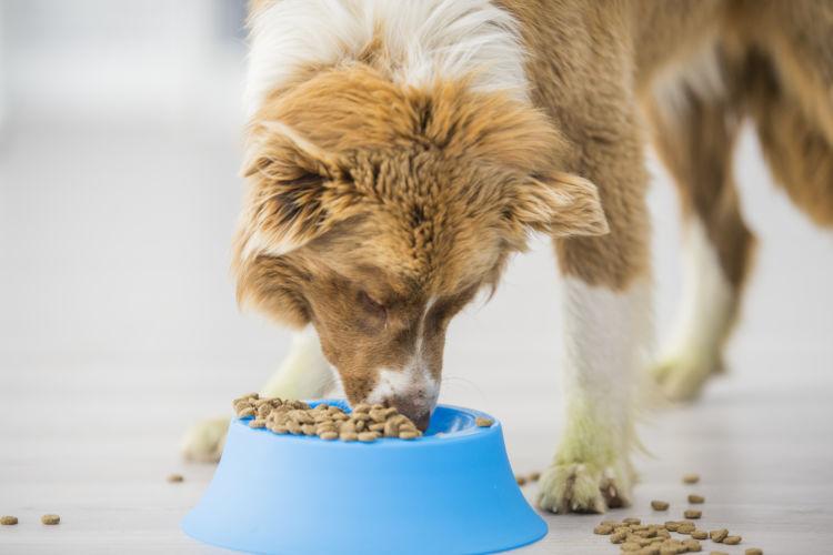 犬の栄養食【総合栄養食】とは?