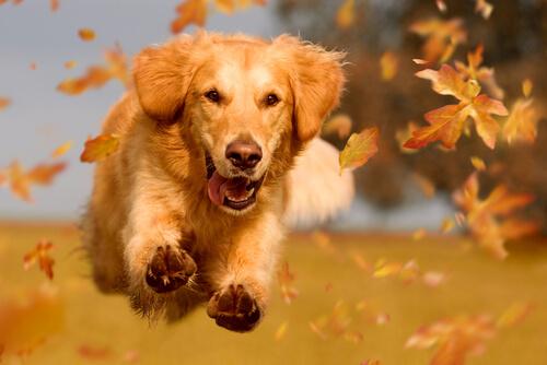 突然の嘔吐!犬の状態によって異なる飼い主すべき4つの対策