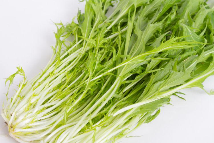 ブロッコリーの仲間⑦【水菜】