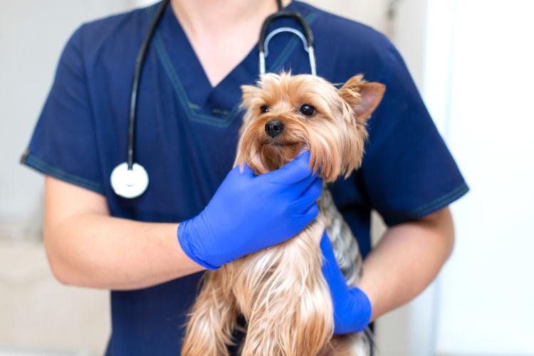 犬のニラの誤飲【治療法・治療費】は?