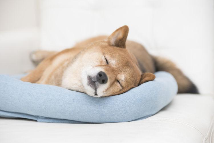 犬の「ボタン」の誤飲、症状は?