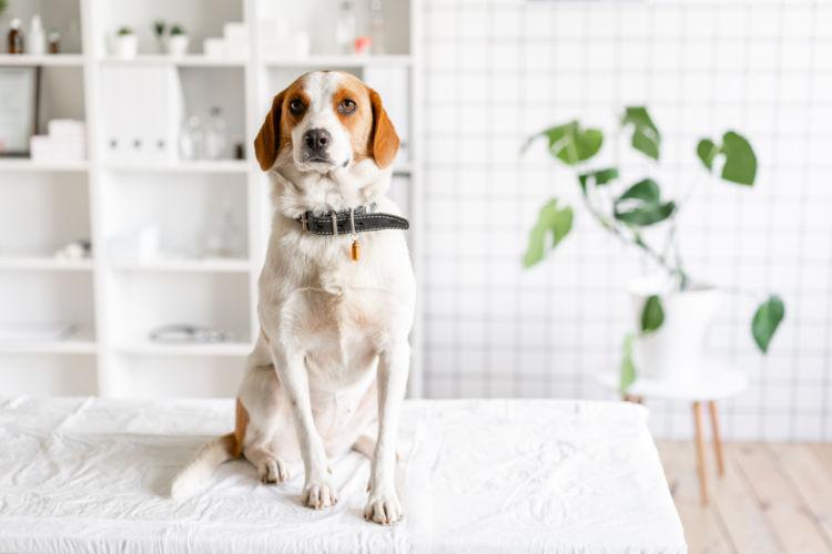 愛犬がプラスチックを誤飲、まずすべきことは?