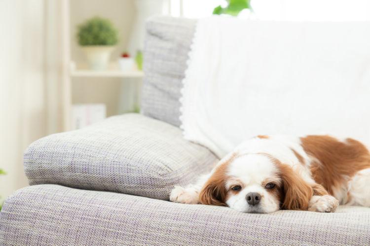 犬の「プラスチック」の誤飲、症状は?