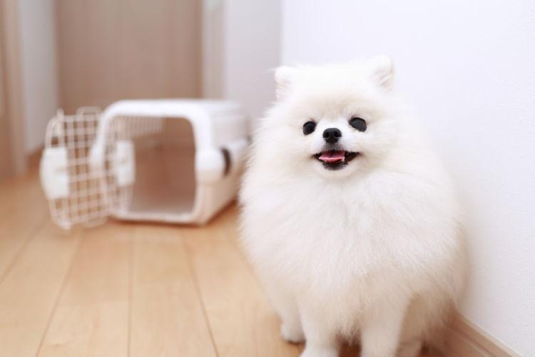 犬の「布」の誤飲、まずすべきことは?
