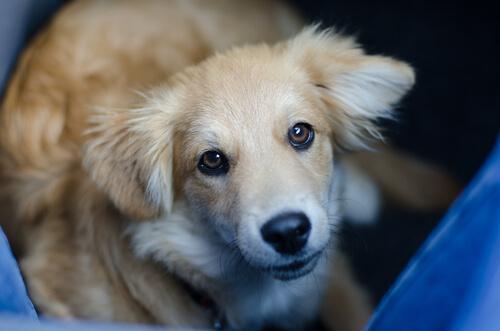 知っていると愛おしさが倍増!? 犬が目をそらす3つの理由