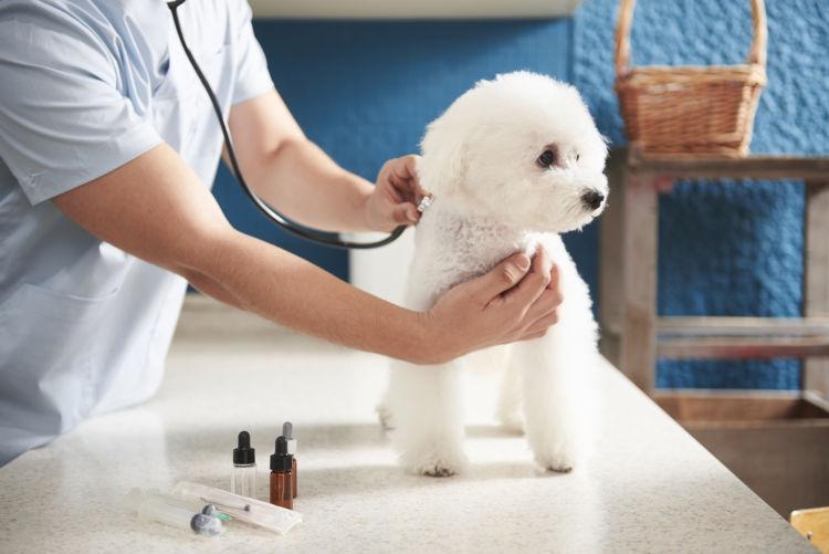 犬の「布」の誤飲、治療法や治療費は?