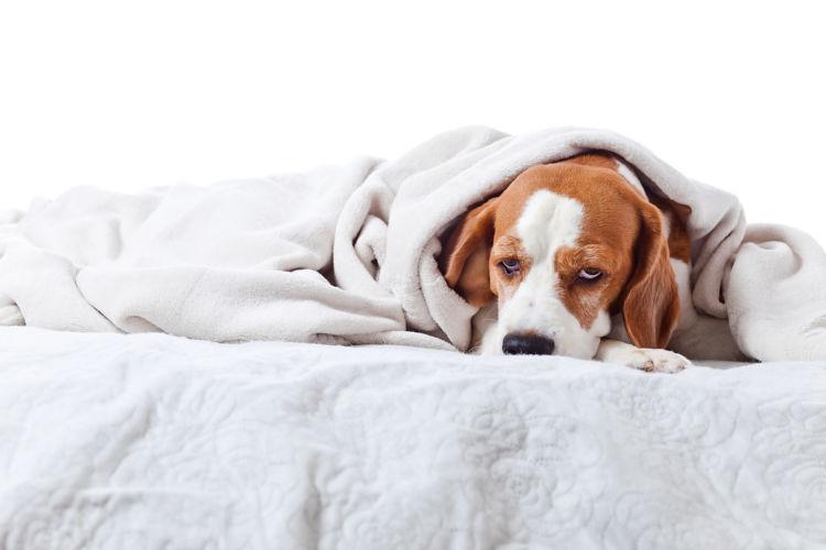 犬の「ビニール」の誤飲、原因や症状は?