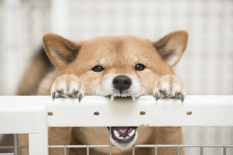 犬の歯の破折「予防」②【一度破折をしたなら、その後はチェックを怠りなく】