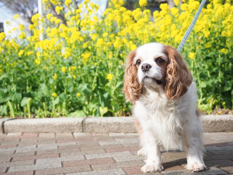 犬の「ビニール」の誤飲、注意点・予防対策!