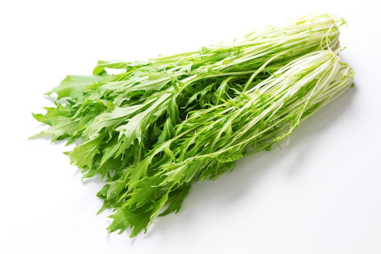【獣医師監修】犬が水菜(生)を食べても大丈夫?適量は?甲状腺ホルモン剤やアレルギーに注意!