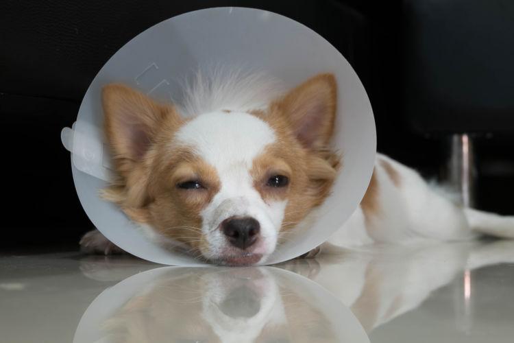 犬の顎骨骨折(がくこつこっせつ)【症状】