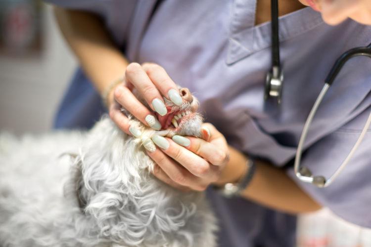 犬の顎骨骨折【治療】