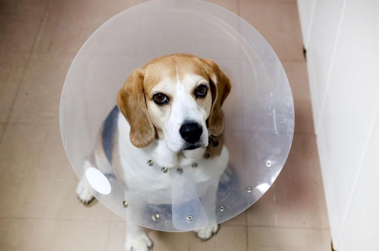 犬の顎骨骨折「処置後」【食事とエリザベスカラーの装着】