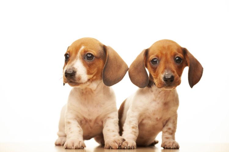 【子犬・老犬】が魚肉ソーセージを食べても大丈夫?
