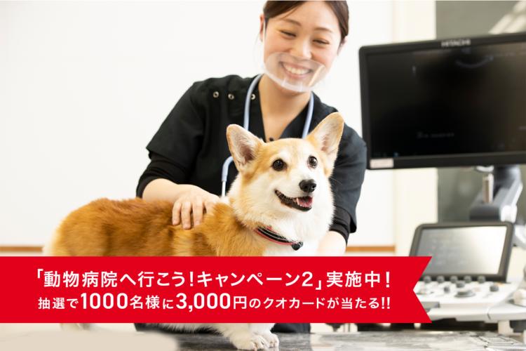 【PECO編集部が密着!】  これで「ペットの健康診断」がぜ〜んぶわかります!