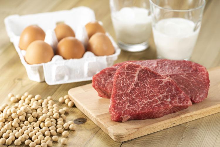 犬の貧血改善「食べ物」④【タンパク質】