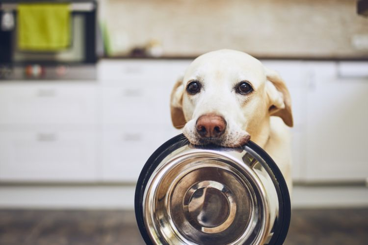 犬の貧血に【良くない食べ物(食事)】は?