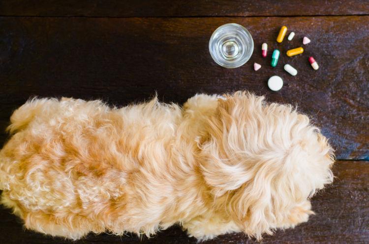 【獣医師監修】犬の栄養補助食品の種類は?子犬や老犬など、愛犬に与える際のメリットや注意点!