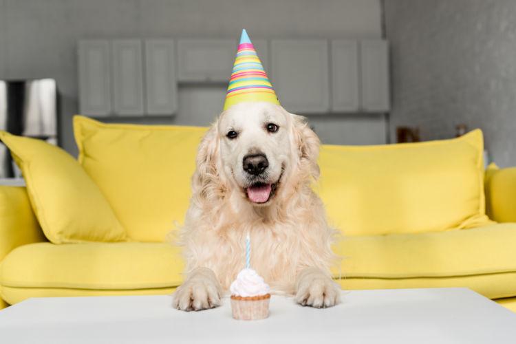 犬 生クリーム ケーキ 誕生日